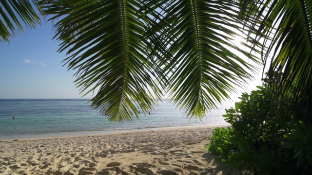 the famous tropical beach anse source d´argent with white sand, sun and sunbeams through palm tree leaves. - naturwunder stock-videos und b-roll-filmmaterial