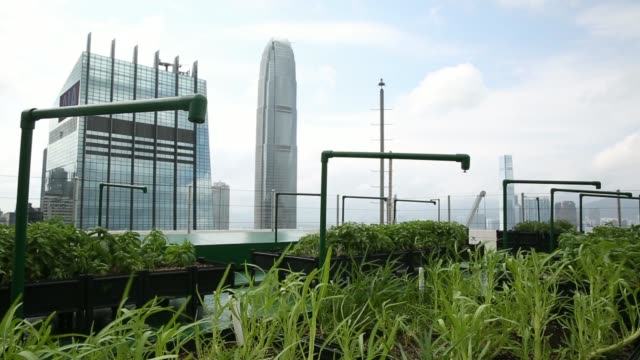 the far east finance center right and the central plaza in the north wan chai business district the distance are seen behind green onion and amaranth... - bank of china tower hong kong bildbanksvideor och videomaterial från bakom kulisserna