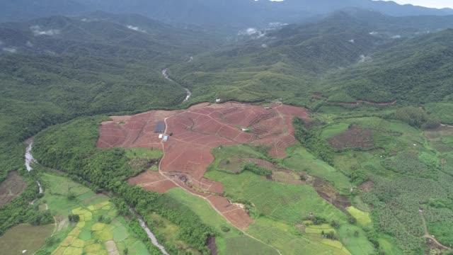 農場は海南、中国にあります - ピスタチオナッツ点の映像素材/bロール