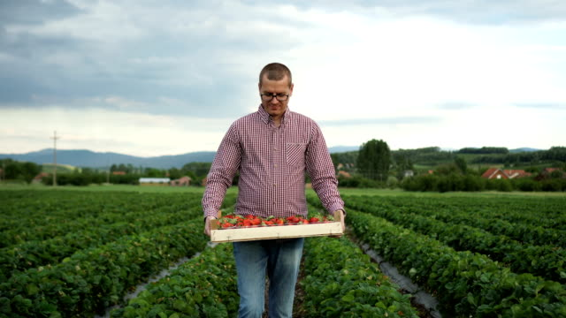 the farmer carries a full crate of strawberries - strawberry stock videos & royalty-free footage