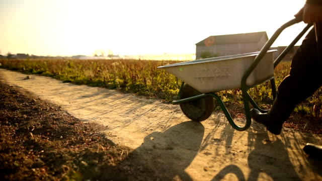 the farmer pushes his wheelbarrow - wheelbarrow stock videos and b-roll footage