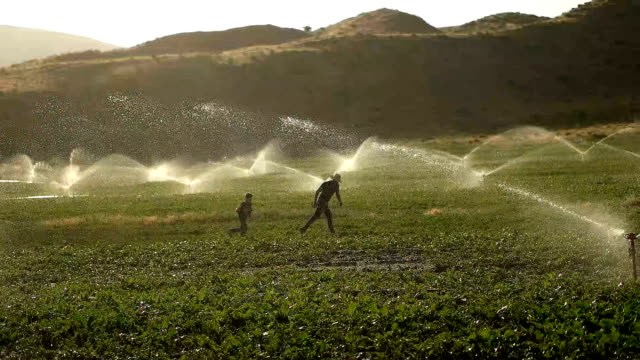 the farmer watering with sprinklers - crop plant stock videos & royalty-free footage
