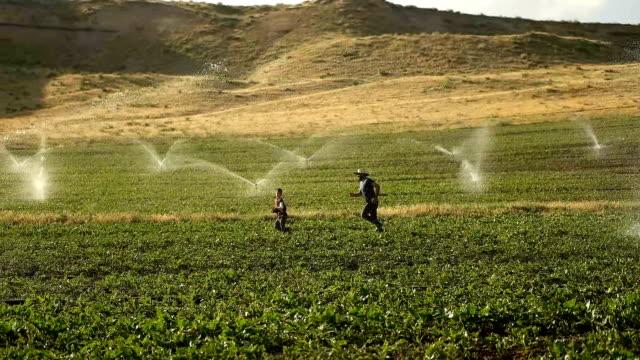 the farmer watering with sprinklers - sprinkler stock videos & royalty-free footage