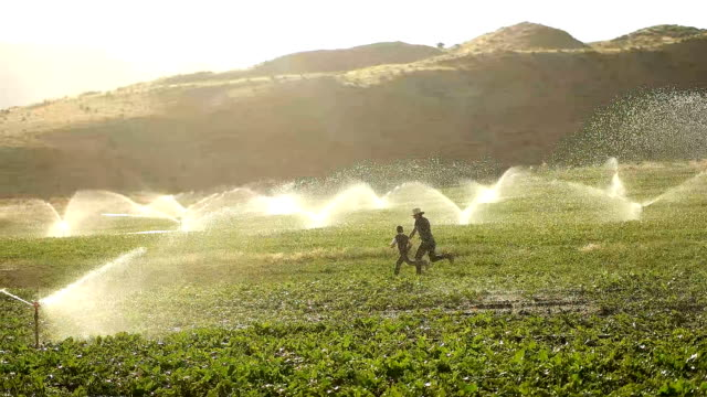the farmer watering with sprinklers - irrigation equipment stock videos & royalty-free footage