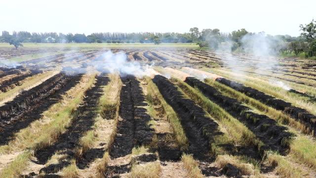 the field is burned. - paglia video stock e b–roll