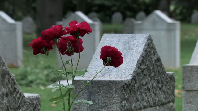 the first and last british soldiers killed during the first world war are buried at the same cemetery in mons, belgium.showing cemetery in mons,... - cemetery stock videos & royalty-free footage
