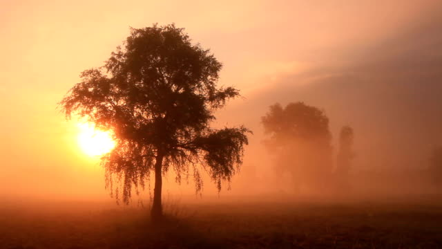 vidéos et rushes de the first rays of the sun shine through the fog - 20 secondes et plus