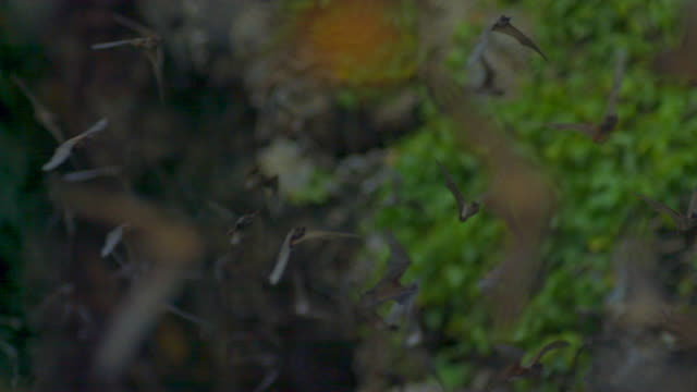 the flock of bats flying in the air in thailand - höhle stock-videos und b-roll-filmmaterial