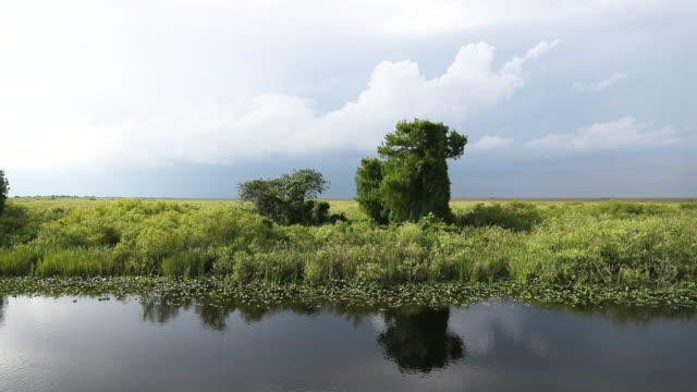 FL: Trump Administration To Support $200 Million Funding For Everglades Restoration