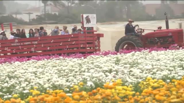 ktla the flower fields at carlsbad ranch - カールズバッド点の映像素材/bロール