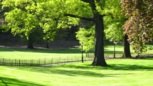 The footpath among the lawns, which is surrounded by fresh green trees and illuminated by sunlight at Central Park New York USA on May 09 2018.