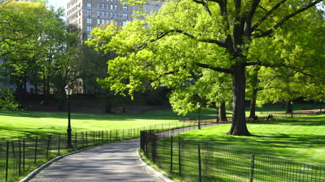 vídeos de stock e filmes b-roll de the footpath among the lawns, which is surrounded by fresh green trees and illuminated by sunlight at central park new york usa on may 09 2018. - public park