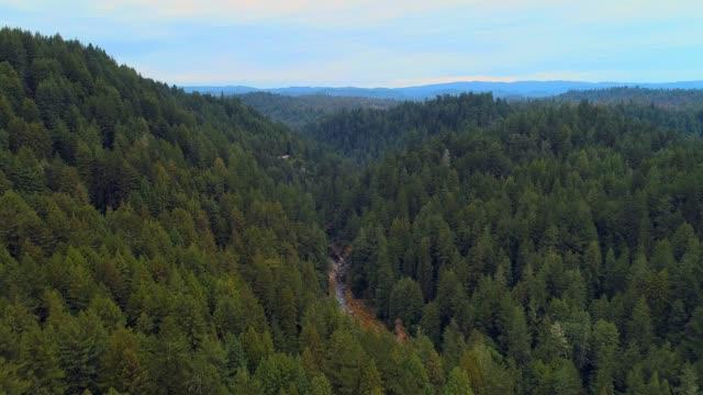 stockvideo's en b-roll-footage met het bos van de sequoias in noord-californië, usa west coast - eco tourism