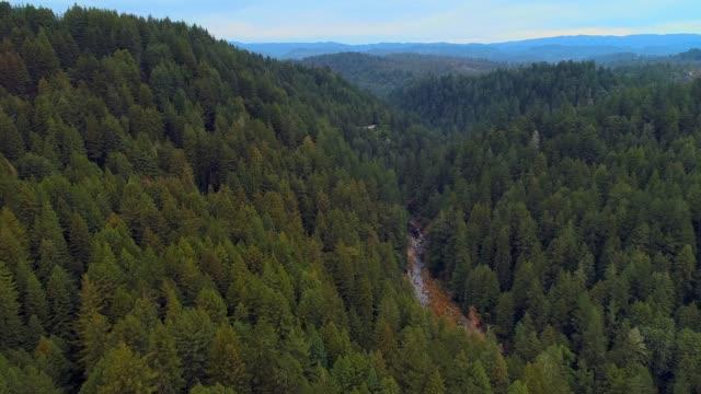 stockvideo's en b-roll-footage met het bos van de sequoias in noord-californië, usa west coast - sequoiafamilie