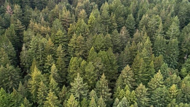 vídeos de stock, filmes e b-roll de a floresta de sequoias no norte da califórnia, eua costa oeste - parque nacional de redwood