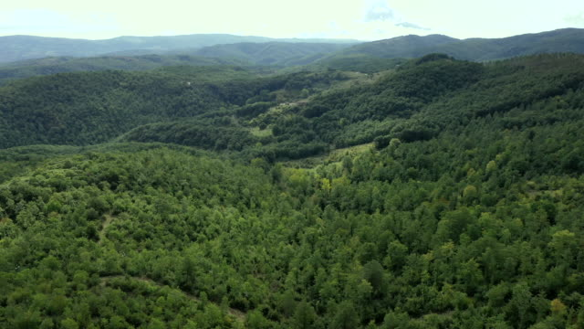 the forest on monte peglia, umbria, italy - pinaceae stock videos & royalty-free footage