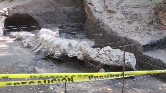 vídeos de stock, filmes e b-roll de the fossilized remains of a whale from an estimated 1.8 million years ago were found in a small fishermen's community in the mexican state of guerrero - 1 minute or greater