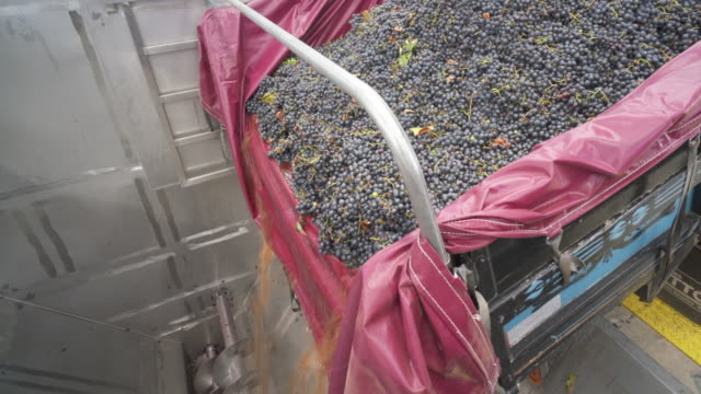 the fresh grape harvest arriving at the cooperativa vinícola são joão, southern brazil. - bundesstaat rio grande do sul stock-videos und b-roll-filmmaterial