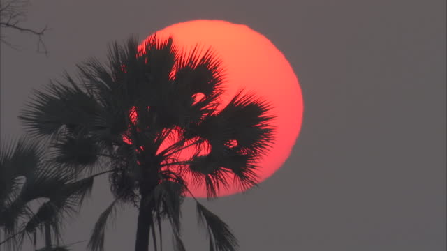 the fronds of a palm tree silhouetted against an orange sun. - blattfiedern stock-videos und b-roll-filmmaterial