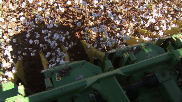 cu of the front of the cotton harvester as moves through field, collecting cotton. - cotton stock videos and b-roll footage
