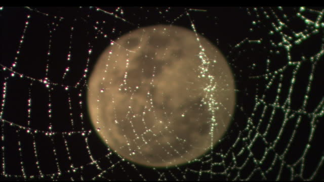 the full moon glows behind a wet spider web. available in hd. - wet wet wet stock videos & royalty-free footage