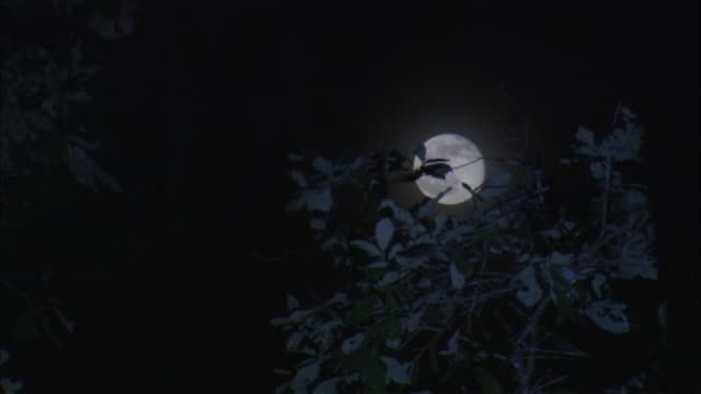 The full moon hangs in the night sky behind a tree.