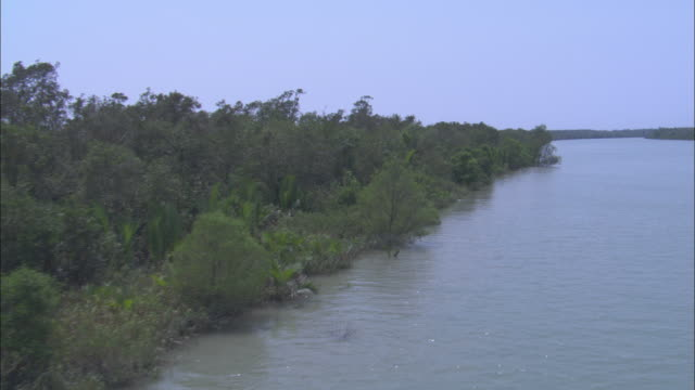the ganges river flows through a mangrove forest. available in hd. - mangrove forest stock videos & royalty-free footage