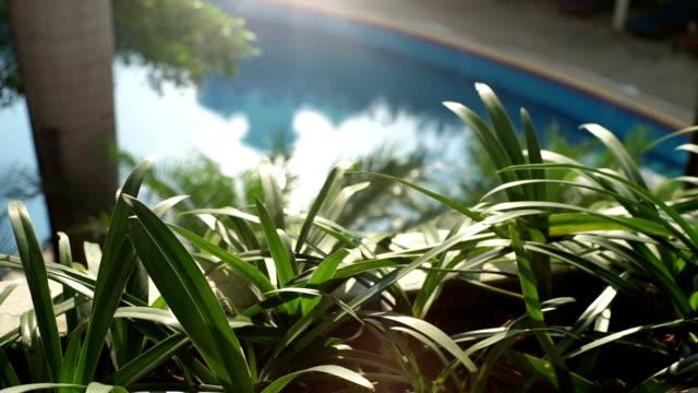 stockvideo's en b-roll-footage met de tuin ingericht naast zwembad. - buitenbad