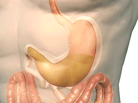 the gastric pit - biomedical illustration stock videos & royalty-free footage