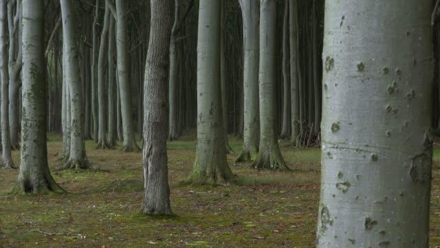 The Ghost Forest of Nienhagen, Mecklenburg-Western Pomerania, Germany