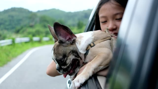 vídeos de stock e filmes b-roll de the girl and the puppy traveled around the countryside by car, opening the window with excitement. - fotografia da cabeça