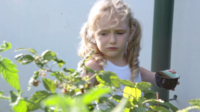 the girl collects raspberries in her grandmother's garden. - brambleberry stock videos & royalty-free footage
