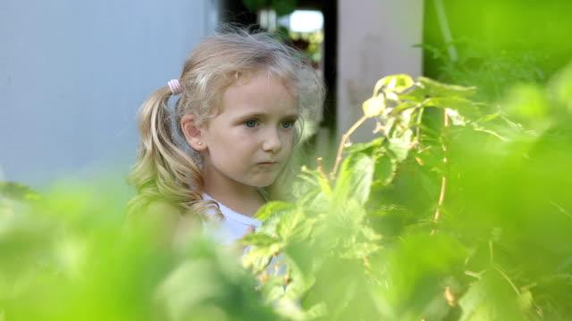 the girl eats raspberries in her grandmother's garden. - brambleberry stock videos & royalty-free footage