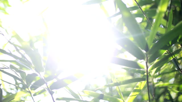 the glare of the sun in the leaves - staring stock videos & royalty-free footage