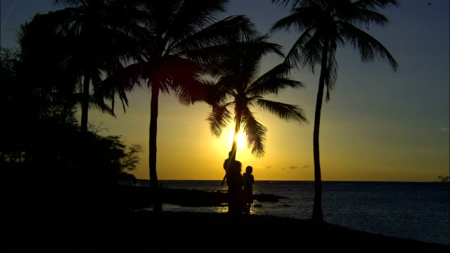 the glowing sky silhouettes a family standing on a tropical beach. - 顕花植物点の映像素材/bロール