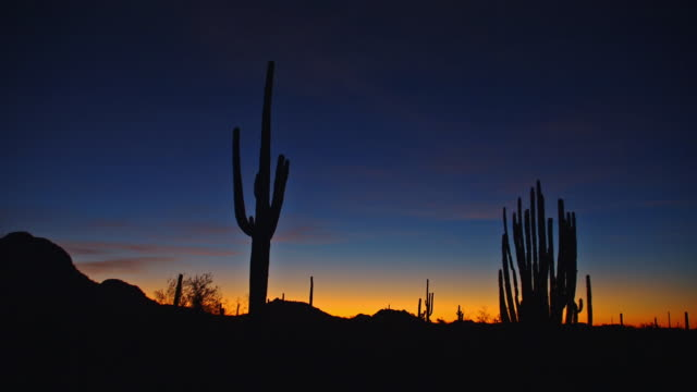 vídeos de stock, filmes e b-roll de the golden hour sky contrasts with the silhouetted cacti in organ pipe cactus national park. - sudoeste dos estados unidos