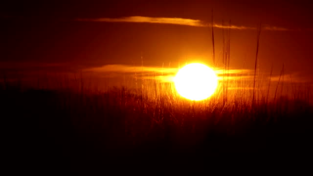 the golden hour - prairie stock videos & royalty-free footage