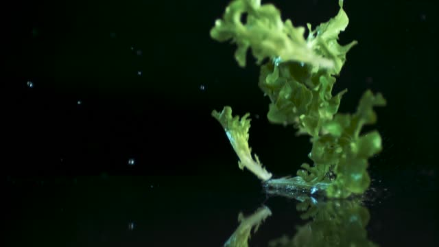 the goodness of green - lettuce stock videos & royalty-free footage