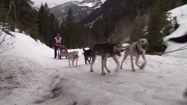 the grand odyssey dog sleigh race is one of the toughest dogsled competitions in the world morzine hautesavoie france - produced segment stock videos & royalty-free footage