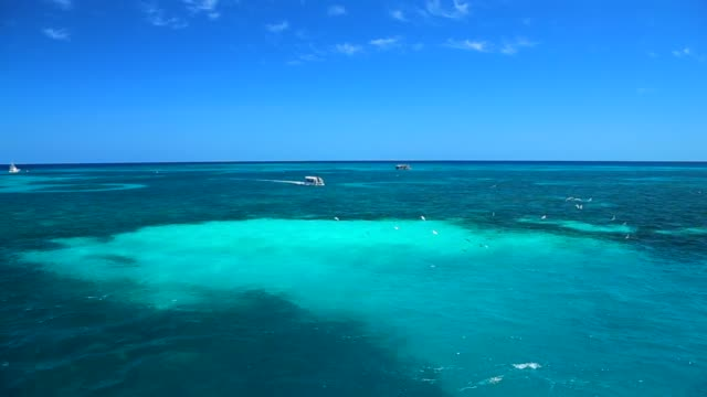 the great barrier reaf, australia - great barrier reef stock videos & royalty-free footage