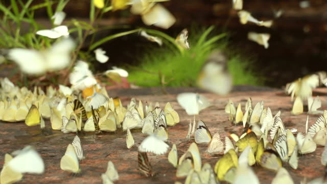 the group of butterflies - pod group of animals stock videos & royalty-free footage