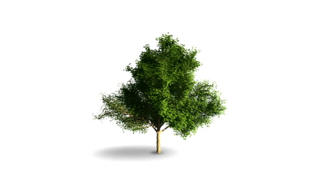 The growth of young trees animation.
