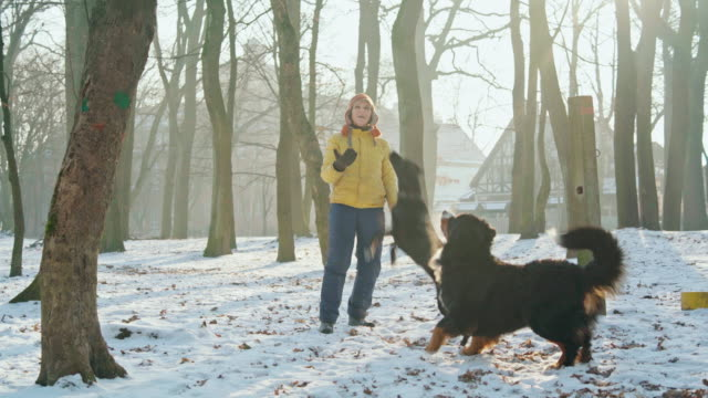 The happy, attractive 50-years-old senior woman playing with dogs in the park in the sunny winter day