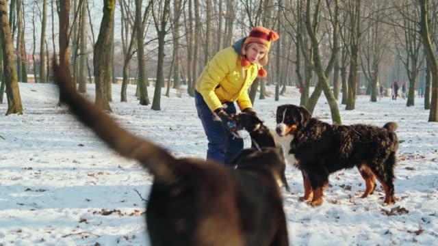 vídeos y material grabado en eventos de stock de la atractiva, feliz 50 años senior mujer jugando con perros en el parque en el día de invierno soleado - 50 54 years