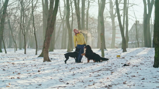 the happy, attractive 50-years-old senior woman playing with dogs in the park in the sunny winter day - off leash dog park stock videos & royalty-free footage
