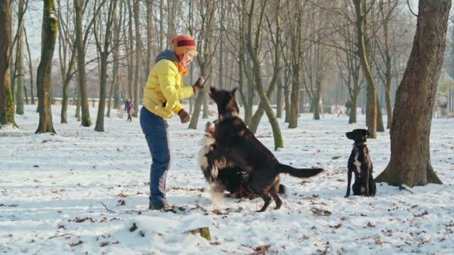 die happy, attraktive 50 jährige senior frau spielen mit hunden im park in der sonnigen wintertag - 50 54 years stock-videos und b-roll-filmmaterial