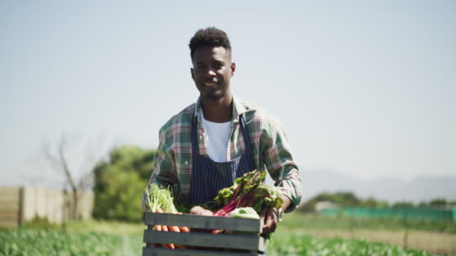 vídeos de stock e filmes b-roll de the harvest is here - agricultor