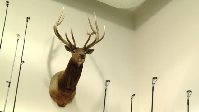 the head of a stuff deer hangs on  the wall - stuffed stock videos & royalty-free footage