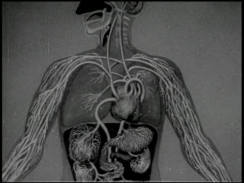 the heart - 6 of 11 - human internal organ stock videos & royalty-free footage