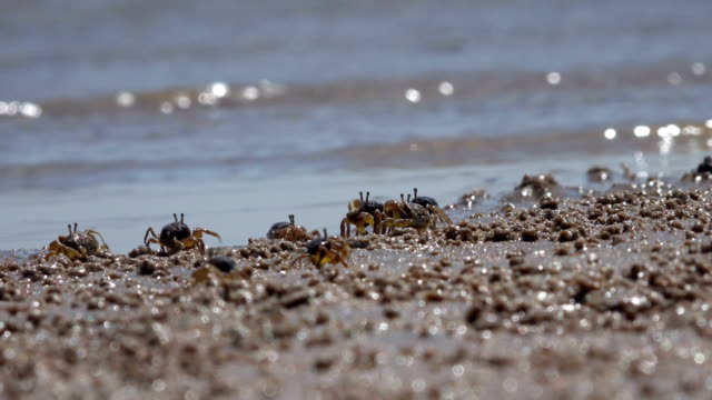 the hermit crabs in the sand beach of the island - krabbe stock-videos und b-roll-filmmaterial